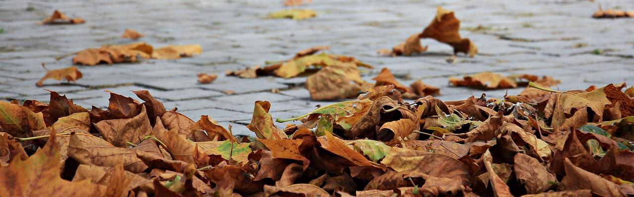 annonces automne